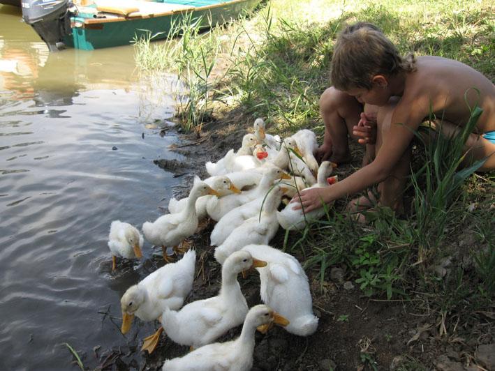delta-Volgi-ducks-kids