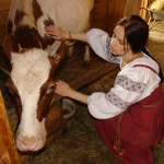 Слабо подоить корову?!