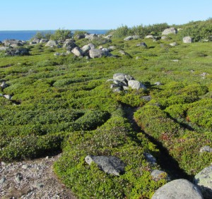 Лабиринты на Большом Заяцком острове